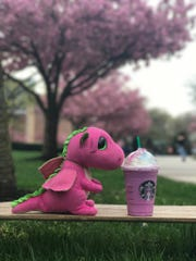 Juicy, the charity's mascot, with a Unicorn Frappuccino.