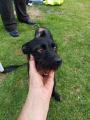 Little Tim was found June 6 at a Simi Valley park with