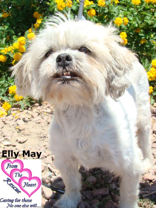 PET OF THE WEEK, ELLY MAY