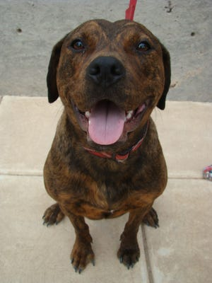 Spirit, available for adoption at From the Heart Animal Rescue.