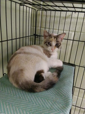 i'm a wonderful girl -- young, beautiful and looking for a nice home.