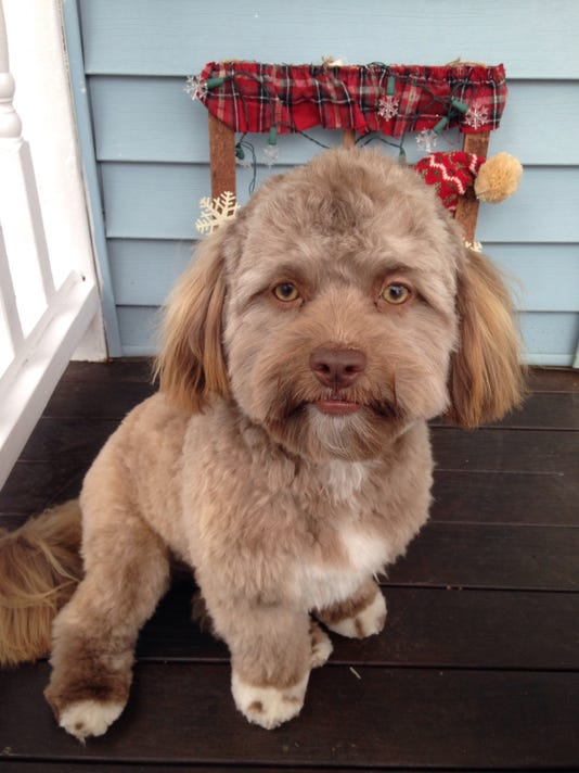 Dog with human face generates online buzz