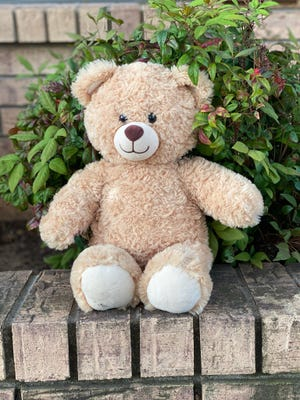 A teddy bear peaks out of the bushes at a house on Olive Street. Teddy bears and a variety of other stuffed animals are popping up at homes and businesses across the city to spread joy and community connection during a time of social distancing.