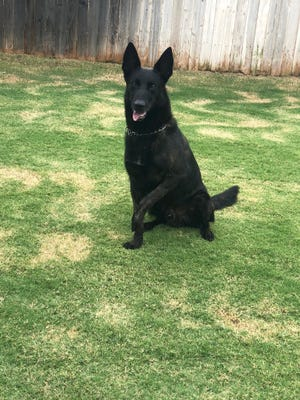 Max, a Dutch Shepherd, Lubbock police K9 unit injured in a shooting last year is retiring, according to Lubbock Police Department officials.