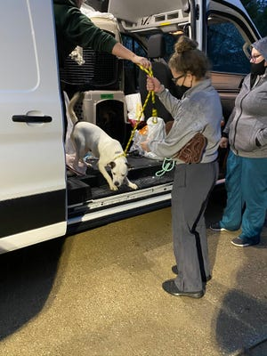 Staff members help unload dogs from Louisiana. In October, Harbor Humane was gifted the van by Bissell Pet Foundation of Grand Rapids. The van will be used for trips to southern states and other shelters in-state to transport animals back to Harbor Humane.