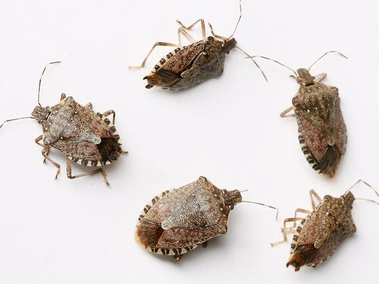 how to detect a bug in your house