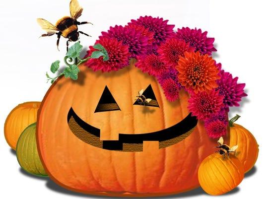 FW-pumpkin
