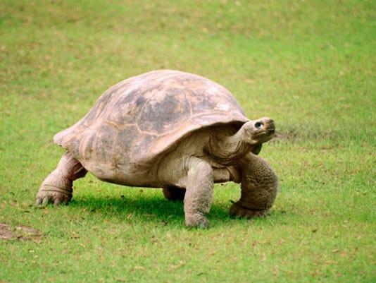 turtle lawn