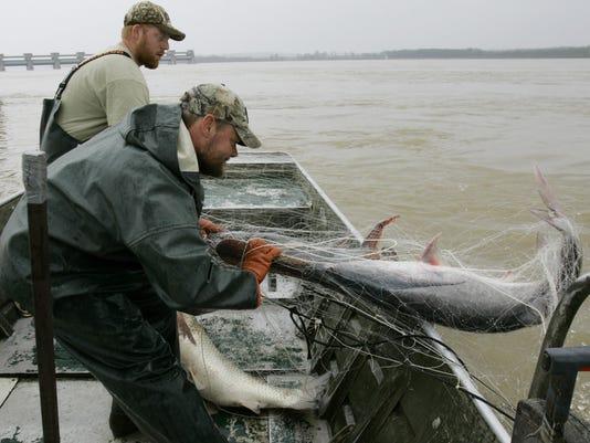 paddlefish caviar