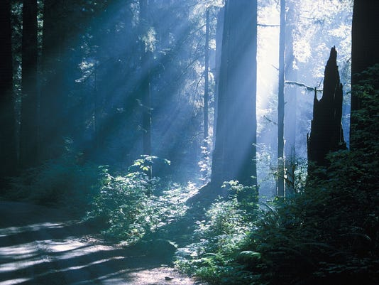 Jedediah Smith Redwoods 2