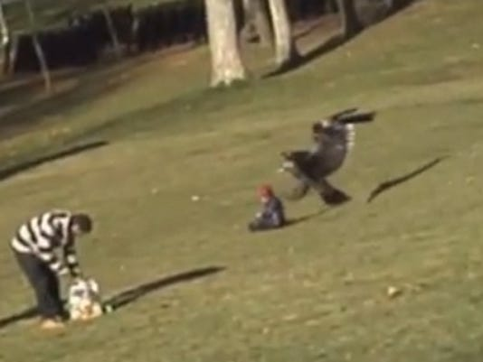Eagle snatches kid