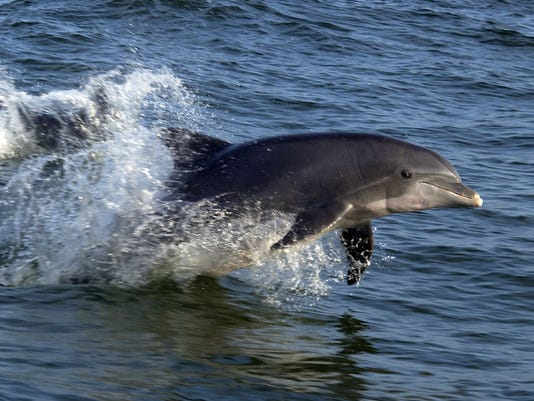 081901dolphins