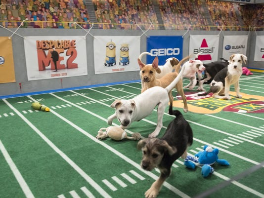 PUPPY BOWL/KITTY HALF-TIME 9