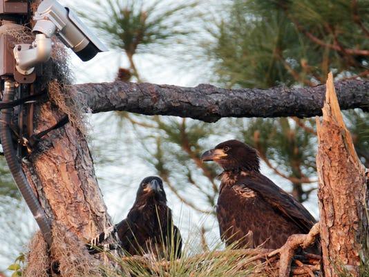 030913 eagles