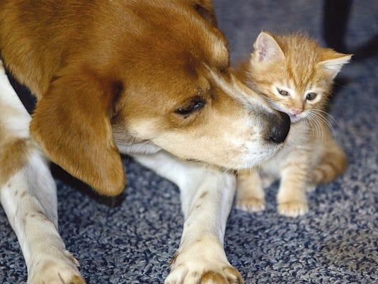 pets life span