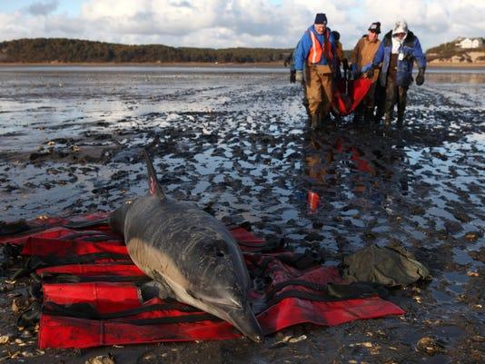 011912 dolphin stranding