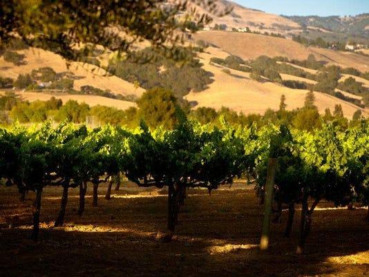 santa clara valley wine