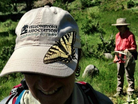 yellowstone butterfly