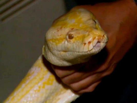 python-grab