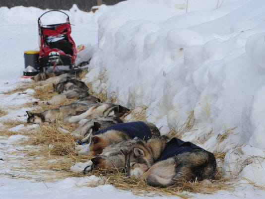 Dog House For Sled Dogs