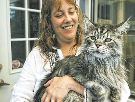 nevada feline certified as longest domestic cat ever - Biggest Cat In The World Guinness 2015