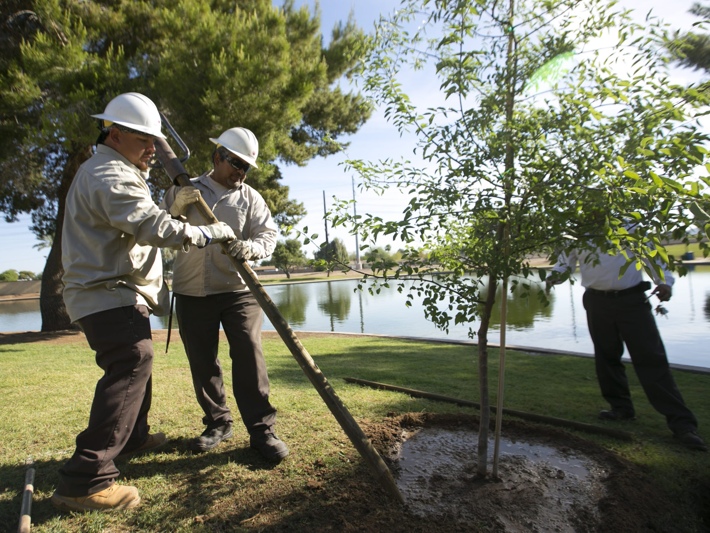 City of Phoenix employees Henry Martinez (left) and JR Valenzuela and Mark Paxton plant a tree at Cortez Park in Phoenix.