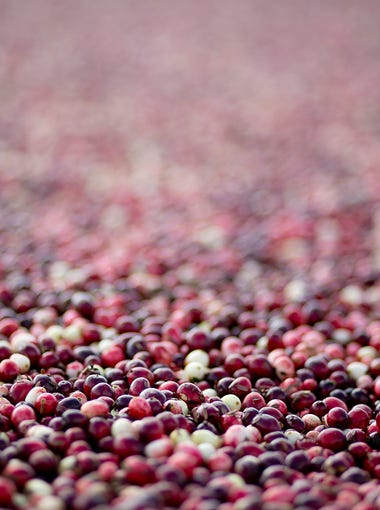 Cranberries float on the water before they are pushed into a pump at Elm Lake Cranberry Company, Tuesday, Oct. 21, 2014.