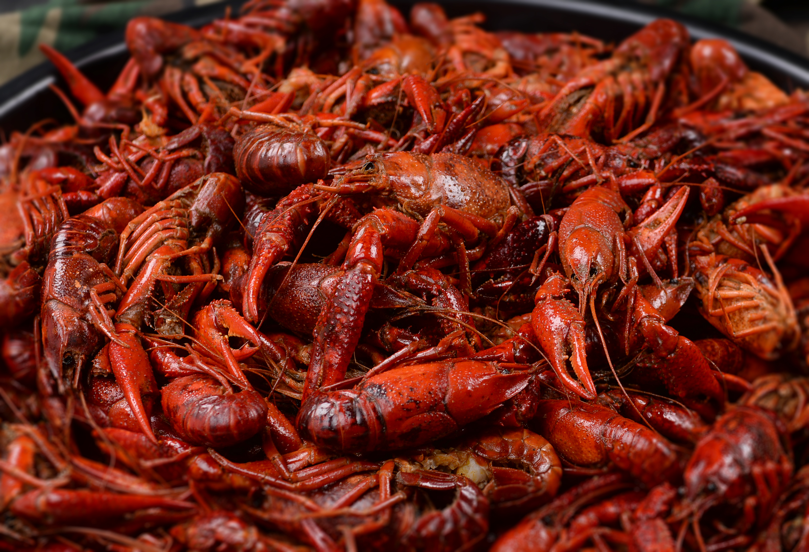 Shreveport, LA is Mad for Mudbugs | Escape to the Southeast