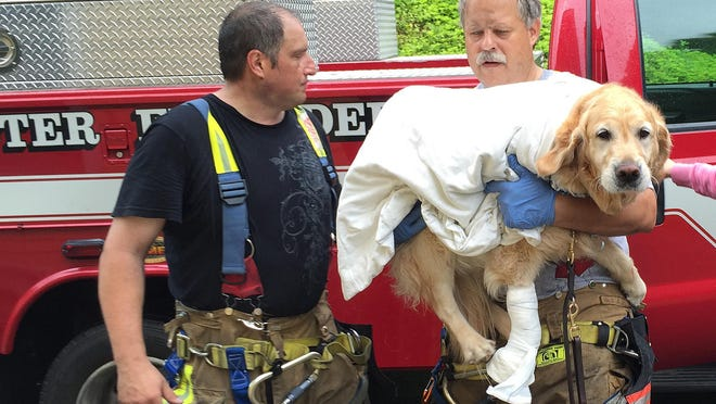 Brewster firefighters Pete Segretti and Marty Miller carry Figo, an injured guide dog, into a veterinarian.
