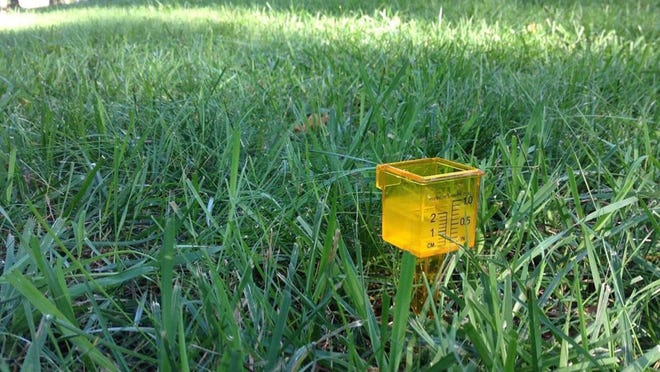 Are you putting out enough water? Is the distribution even? Do you have overly dry or wet areas?  Your goal is to water one-half to three-quarters inch each time and then wait until the lawn asks for more water.