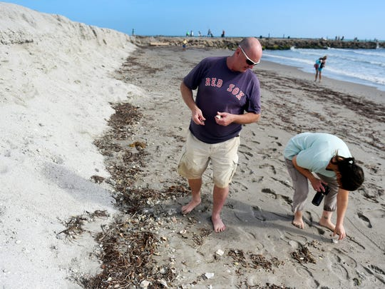 Doug Learned and Janet Park, of Narragansett, Rhode Island, look for shells on the beach just south of the Fort Pierce Inlet on Monday, Feb. 12, 2018, after visiting Learned's father in Stuart. In the coming weeks, crews will begin staging equipment immediately south of the Fort Pierce Inlet to begin pumping roughly 385,000 cubic yards of sand on the beach to combat the severe erosion that has occurred. The U.S. Army Corps of Engineers, in partnership with the St. Lucie County Erosion District, has contracted with Great Lakes Dredge & Dock Company to construct the renourishment project, which is slated to start pumping sand in early March.