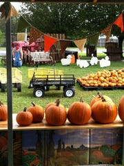 Pumpkins range in price from $1-$100, but individuals