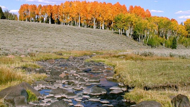 Mammoth Creek in the Dixie National Forest on Cedar Mountain.