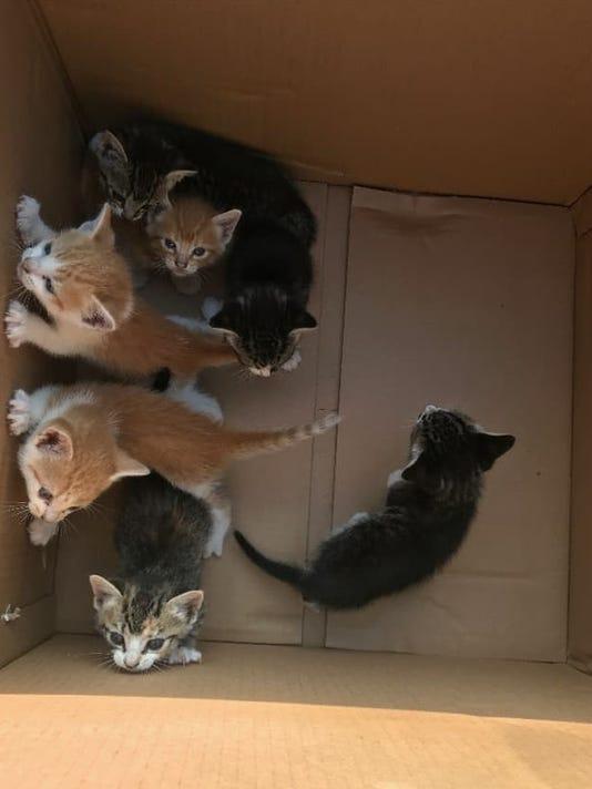 636638264224687770-BoxOKittens.jpg
