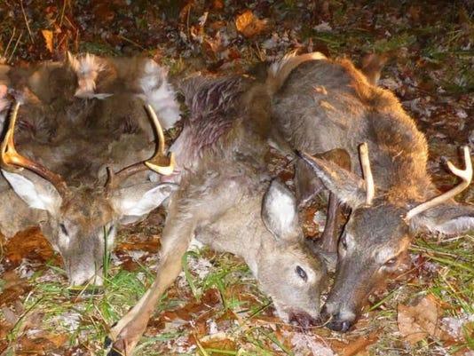 Poaching case