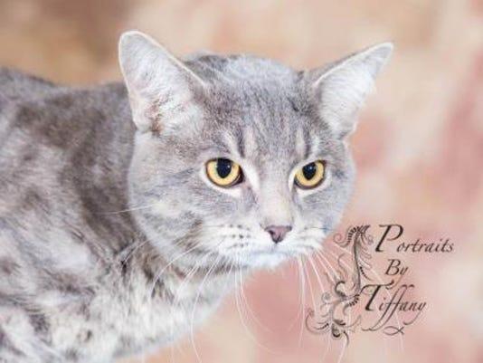 WDH 0504 Pet of the Week-Mister.jpg