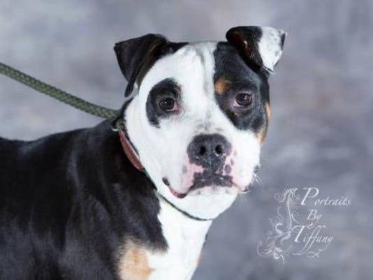 WDH 0629 Pet of the Week-Ellie