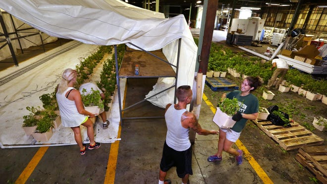 Meaghan Mobley of Sustainable Local Foods Indiana hands a bucket of basil plants to fellow employee Bill Miles as they move 2,400 basil plants into the urban farm company's first hydroponic growing system (left) being set up in an underutilized warehouse on South Rural Street in Indianapolis on Friday, Aug. 14, 2015. Produce such as collard greens, cucumbers, lettuce, peppers, tomatoes and strawberries will be grown year-round in the 61,000-square-foot warehouse.