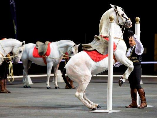 Horses D_GOTRH-37.jpg