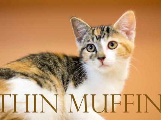 B Thin Muffin mcaac cmyk