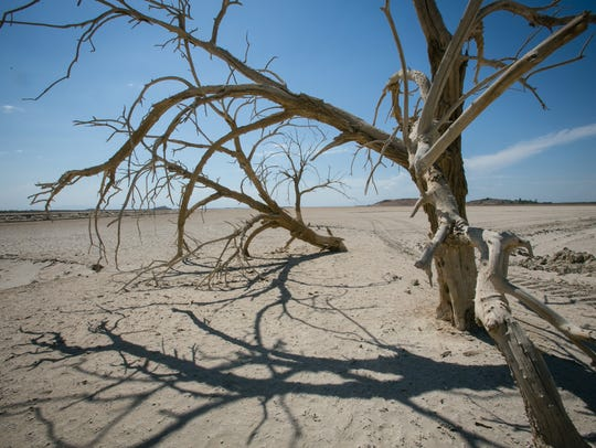 A dead tree stands on the dry shoreline of the Salton