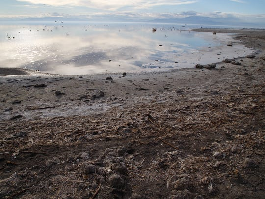 Shoreline filled with fish remains and debris is exposed
