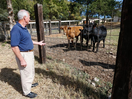 Ken Ortman tries to get a group of cows to come to the fence at the Lives Under Construction Boys Ranch in Lampe, MO.