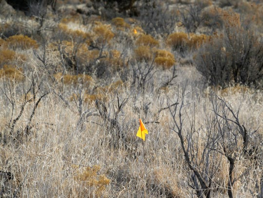 Yellow flags mark the path for a new trail on Wednesday, Jan. 31, in the Glade Run Recreation Area north of Farmington.