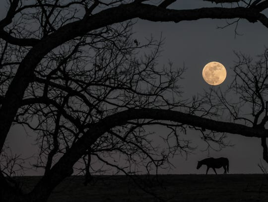 A supermoon rises above a horse farm in Woodford County
