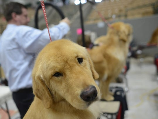 Avian waits his turn at the 2018 Country Music Cluster Dog Show at the Williamson County Ag/Expo Park in Franklin.
