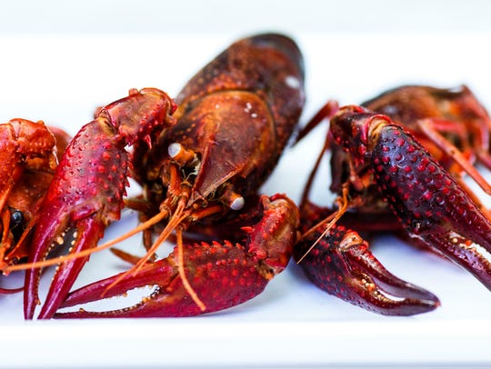Red swamp crawfish