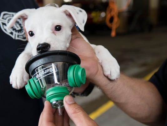 Louisville firefighter demonstrates pet oxygen masks with a puppy