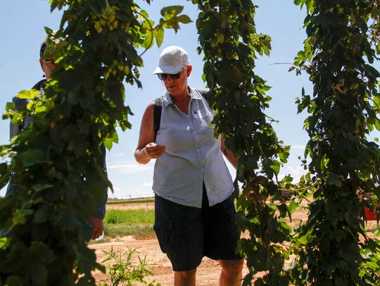 Kathy Cade inspects a hops vine Friday during the New