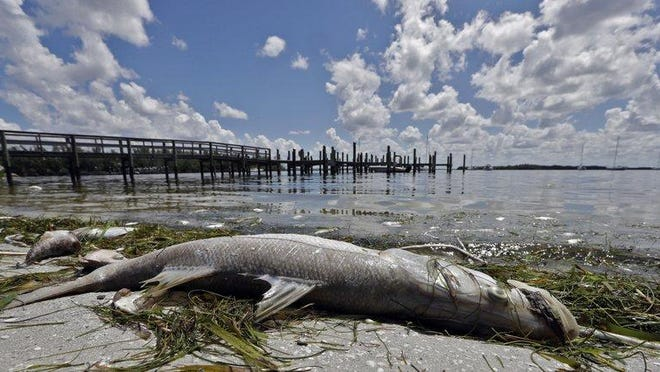 BRADENTON BEACH -- Media reports of fouled beaches, fish kills, and the stench of HABs are not good for tourism - about 10% of Florida's economy. But even more concerning, our health is at risk.